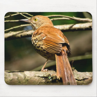 Georgia State Bird - Brown Thrasher Mouse Pad