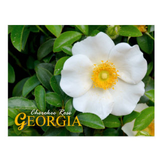 Georgia State Flower: Cherokee Rose Postcard