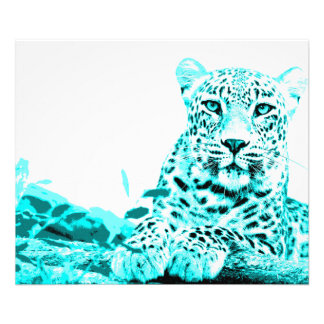 Georgous Leopard in Turquoise Photograph