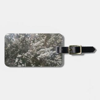 Geraldton Wax Flower Bag Tags