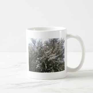 Geraldton Wax Flower Basic White Mug