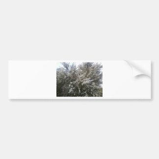 Geraldton Wax Flower Bumper Sticker