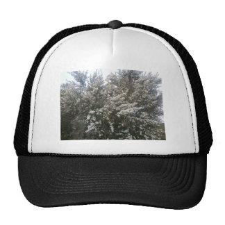 Geraldton Wax Flower Cap