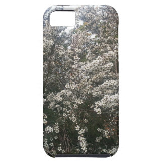 Geraldton Wax Flower Case For The iPhone 5