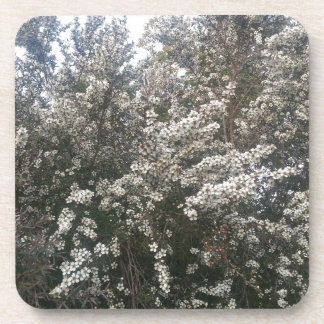 Geraldton Wax Flower Coasters