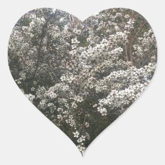 Geraldton Wax Flower Heart Sticker