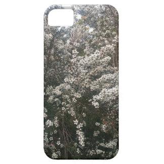 Geraldton Wax Flower iPhone 5 Cases