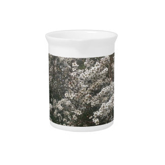 Geraldton Wax Flower Pitchers