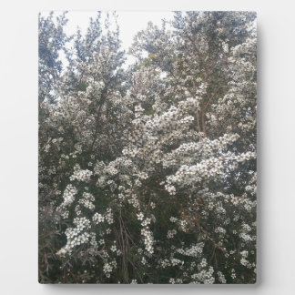 Geraldton Wax Flower Plaques