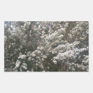 Geraldton Wax Flower Rectangular Sticker