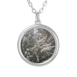 Geraldton Wax Flower Round Pendant Necklace
