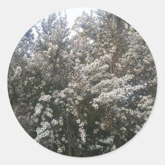 Geraldton Wax Flower Round Sticker