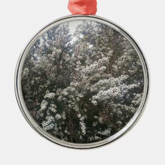 Geraldton Wax Flower Silver-Colored Round Decoration
