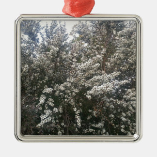 Geraldton Wax Flower Silver-Colored Square Decoration