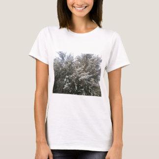 Geraldton Wax Flower T-Shirt