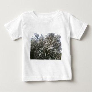 Geraldton Wax Flower Tee Shirts
