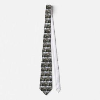Geraldton Wax Flower Tie