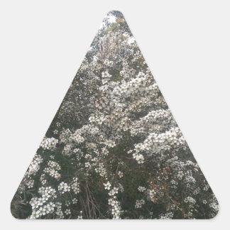 Geraldton Wax Flower Triangle Sticker