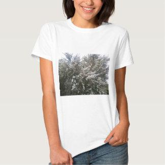 Geraldton Wax Flower Tshirt