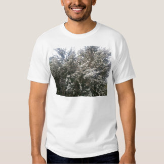 Geraldton Wax Flower Tshirts