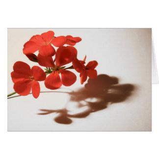 Geranium Blank Card Sympathy Condolence