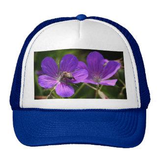 Geranium with Bee Hat