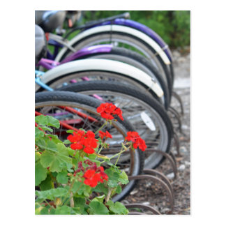 Geraniums and Bicycles Postcard