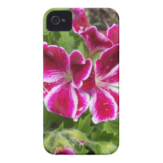 Geraniums iPhone 4 Covers