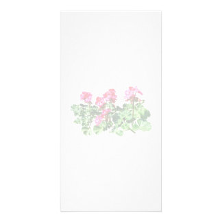 Geraniums In a Row Photo Card