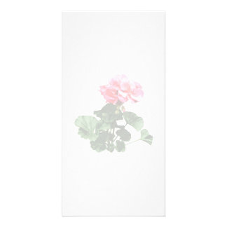 Geraniums Standing Tall Customized Photo Card