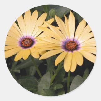 Gerber Daisey Round Sticker