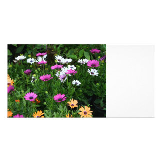 gerber daisies field multi colored flower customized photo card