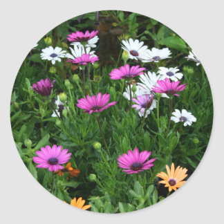 gerber daisies field multi colored flower stickers