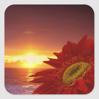Gerber Daisy and sunset Square Stickers