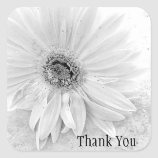 Gerber Daisy In Black And White Thank You Square Sticker
