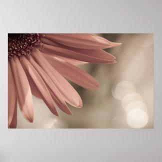 gerber daisy print