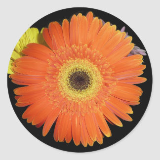 Gerber Daisy Round Stickers