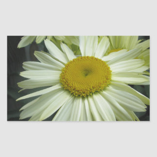 Gerber Daisy Shining Bright Rectangle Stickers