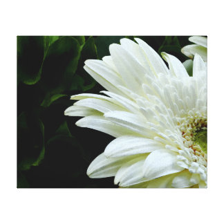 Gerber Daisy Watercolor Canvas Print