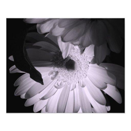 'Gerber Poetry' Photographic Print