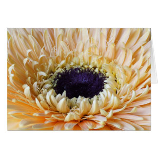 Gerbera cards, Apricot Card