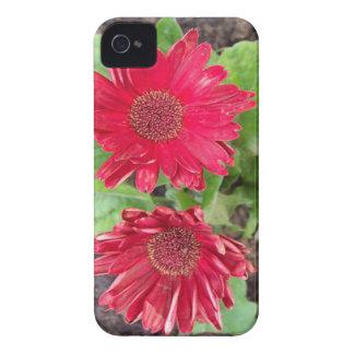 Gerbera Daisies iPhone 4 Case-Mate Cases