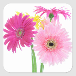 Gerbera Daisy Flowers Square Sticker