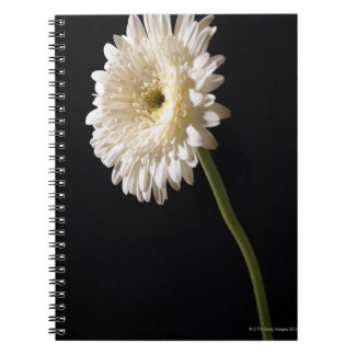 Gerbera daisy on black background notebooks