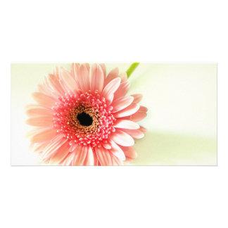 Gerbera Daisy Custom Photo Card