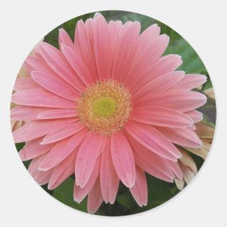 Gerbera Daisy Pink Round Sticker