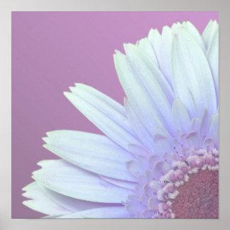 Gerbera Daisy Print