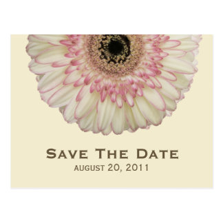 Gerbera Daisy Save The Date Postcard