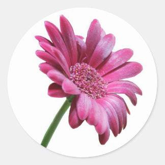 Gerbera Daisy Sticker