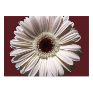 Gerbera Daisy Wedding/ Place Cards Large Business Cards (Pack Of 100)